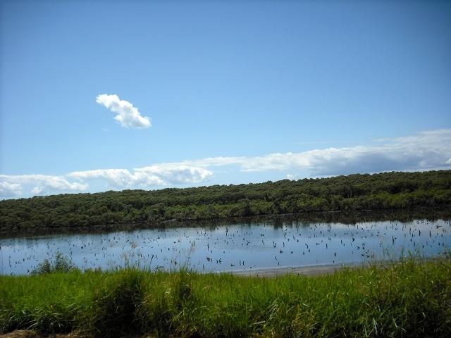 Mangrove Lagoon