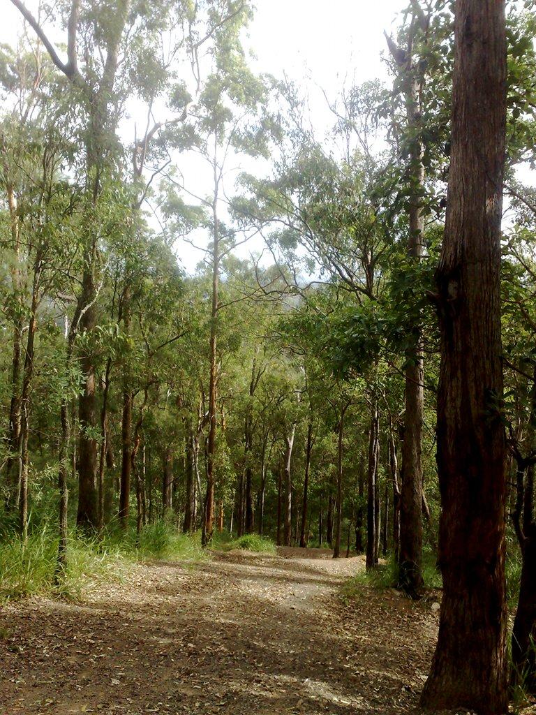 Kokoda Track, Mount Coot-tha