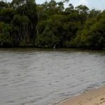 Heron at Deception Bay