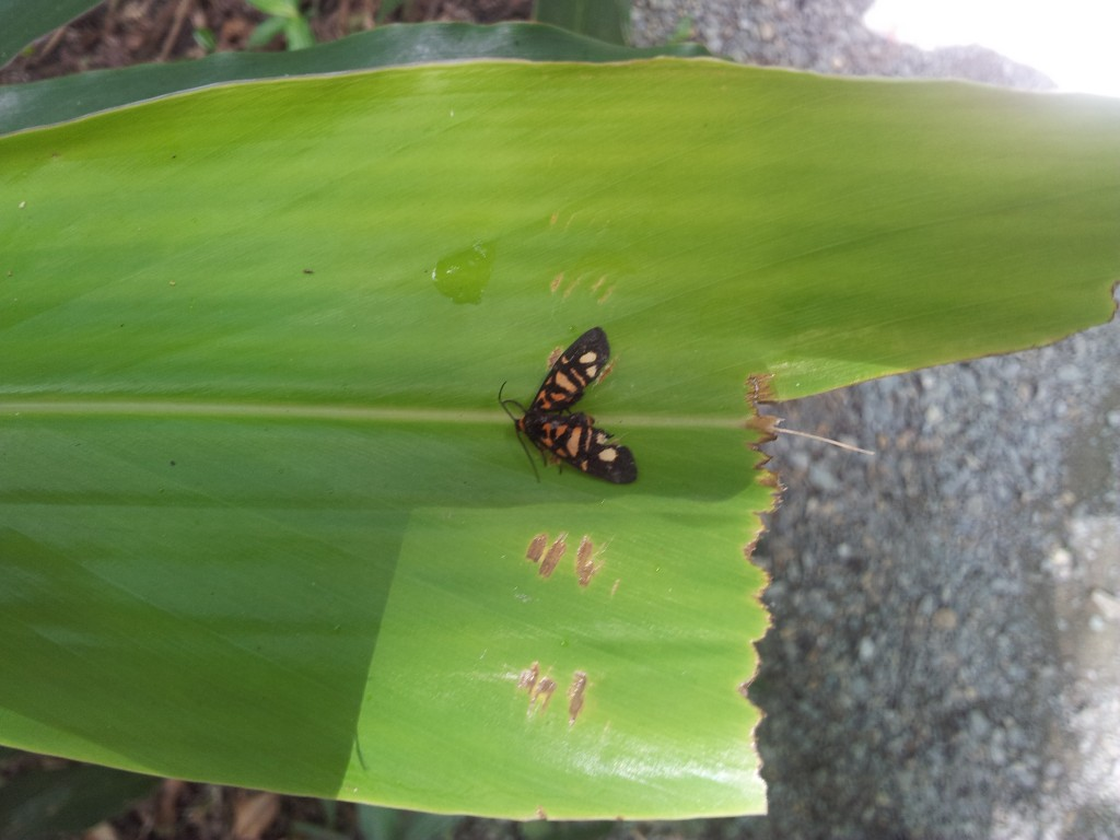 Moth on leaf