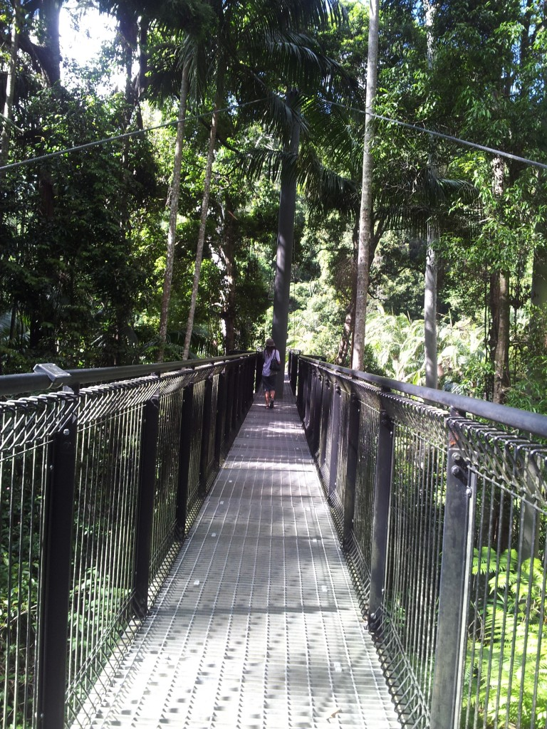 Skywalk at Mount Tamborine