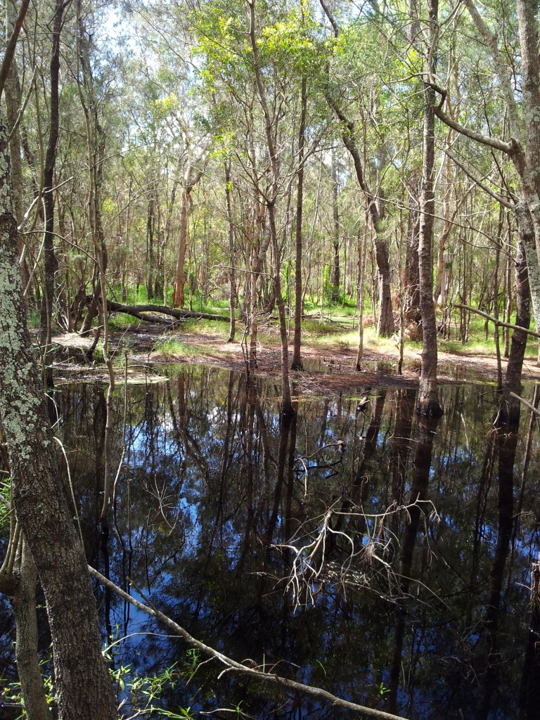 Swamp in wetlands